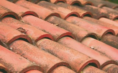 Why Your Tile Roof is Gathering Mildew
